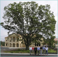 Century old oak tree at Greystone Cosmetic Center
